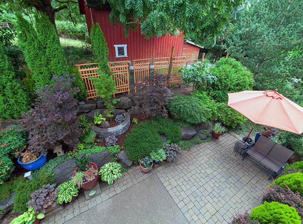 Backyard landscape with a number of shrubs and plants.