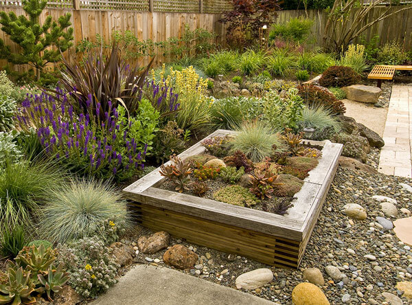Drought resistant plants next to a raised bed.