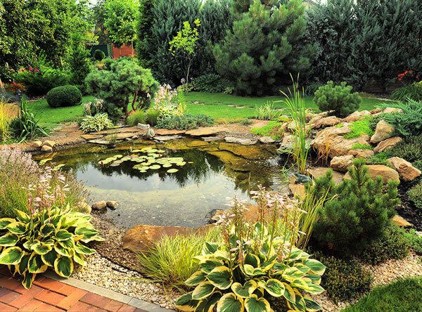 Pond with beautiful plants surrounding it, and a small grass area.