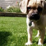 synthetic turf for pets