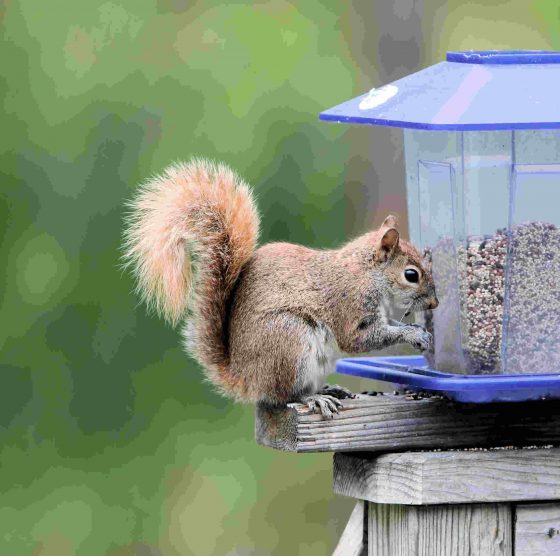 Ideas to keep squirrels away from your bird feeders