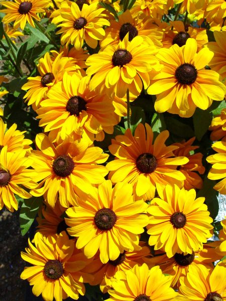Tips on How to Care for Annuals