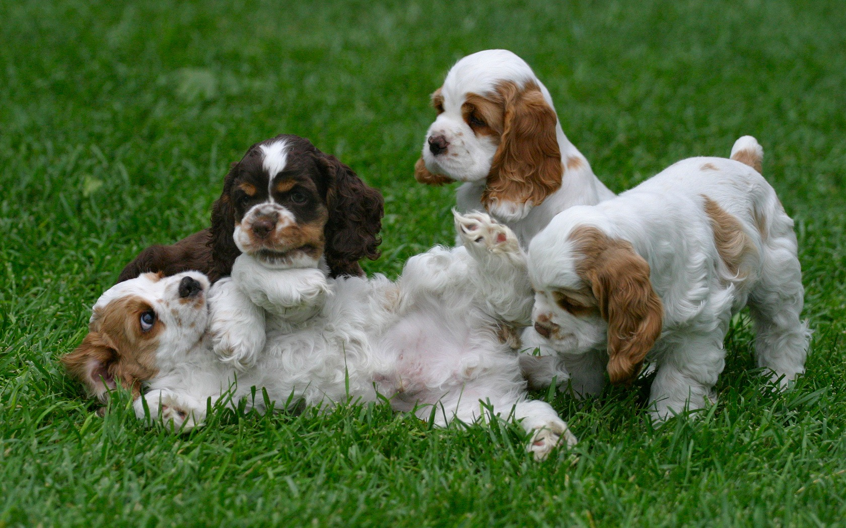 dog daycare design ideas
