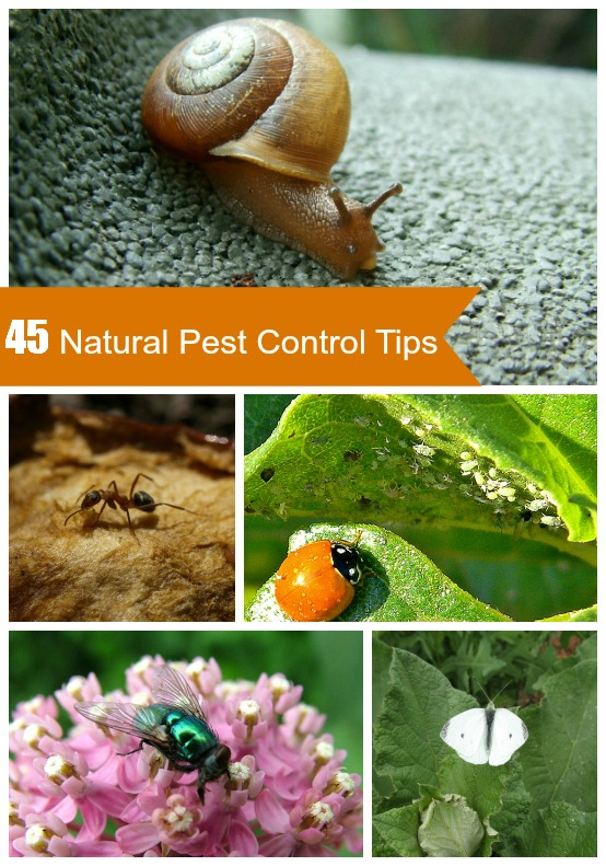 natural organic pest control tips - Home And Garden Pest Control