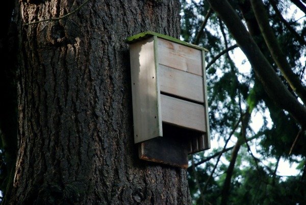 bat house natural mosquito control