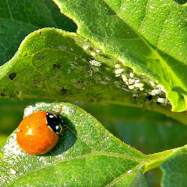 Natural Organic Garden Pest Control Tips INSTALL IT DIRECT