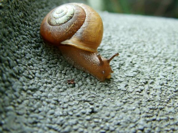 natural garden snail pest control