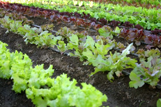 Chemical-Free Yard Care: Natural and Organic Gardening Tips
