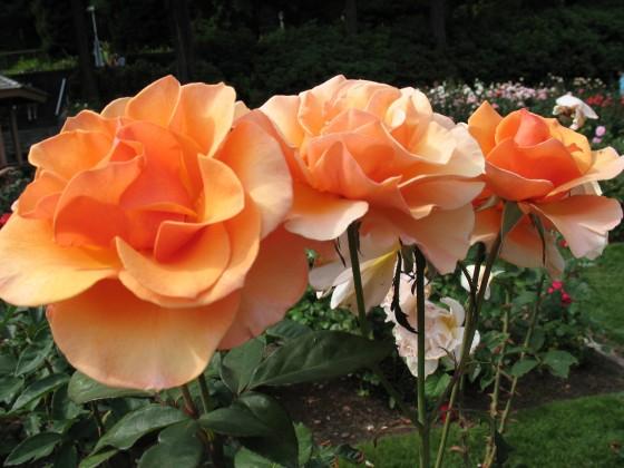 Backyard Landscaping: Themes