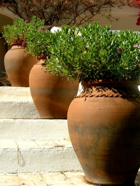 Easy Landscaping Ideas for Increasing Curb Appeal