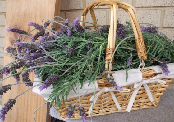 Herb Garden Ideas: Best Herbs to Grow for Family Health