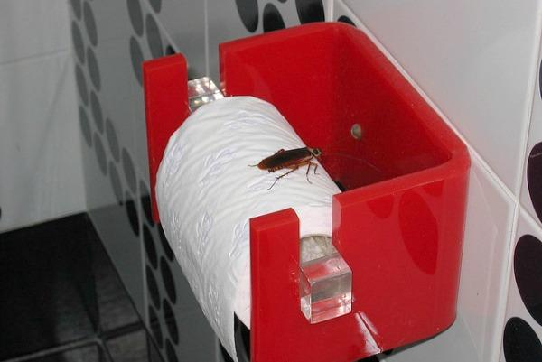 cockroach natural pest control