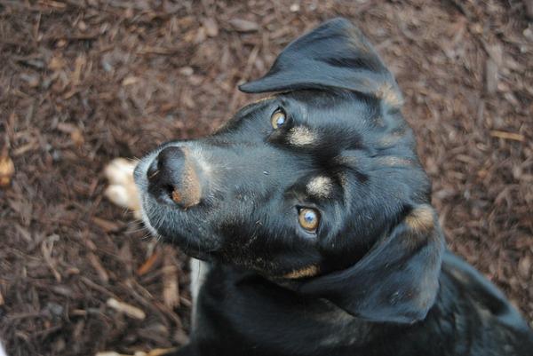dog yard wood chips landscaping