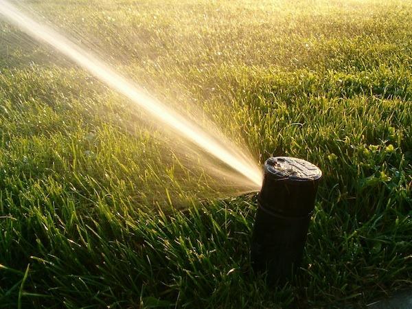 grass maintenance tips