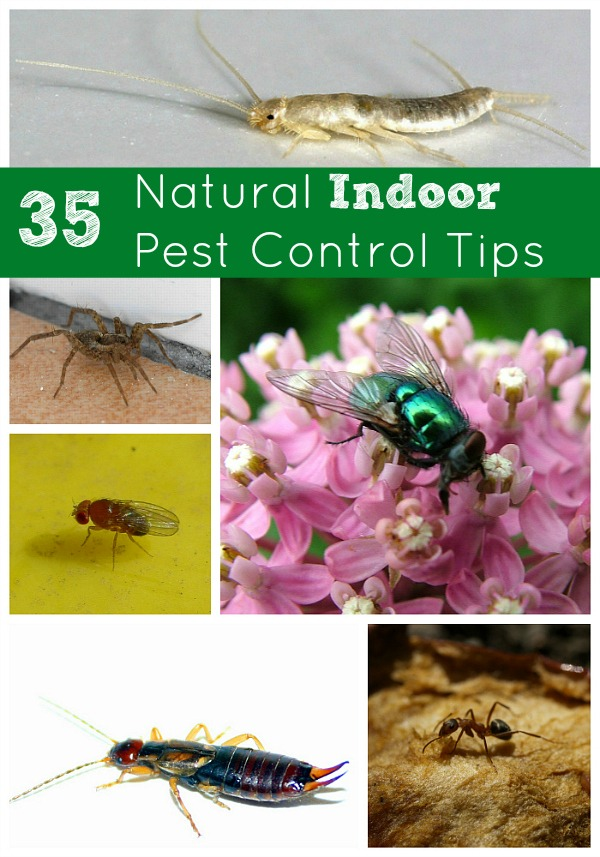 Natural Indoor Home Pest Control Tips