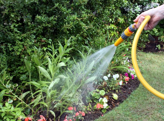 Garden like Your Grandparents to Save Money and Stay Active