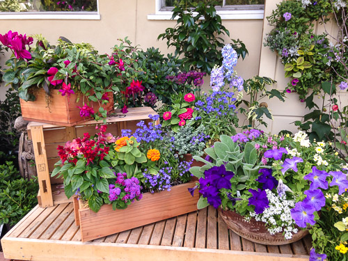 Container Gardening: How to deal with drainage issues