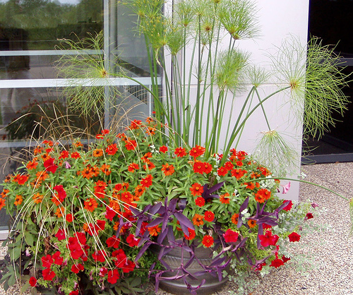 How to Place the Plants in the Container