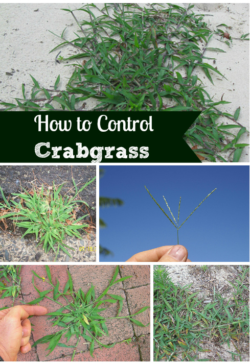How to get rid & kill crabgrass and weeds