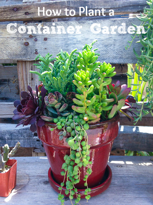 How to Plant a Container Garden to Enhance Your Yard