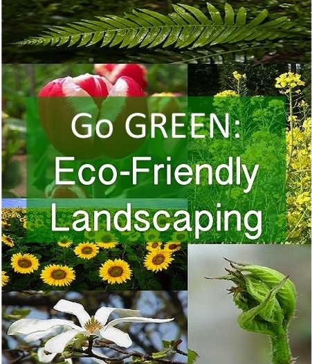 Going Green: Eco-friendly Landscaping