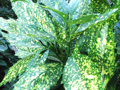 Keep plants away from very hot, cold or drafty areas in your home