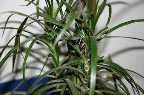 Common House Plants & How to Care For Them