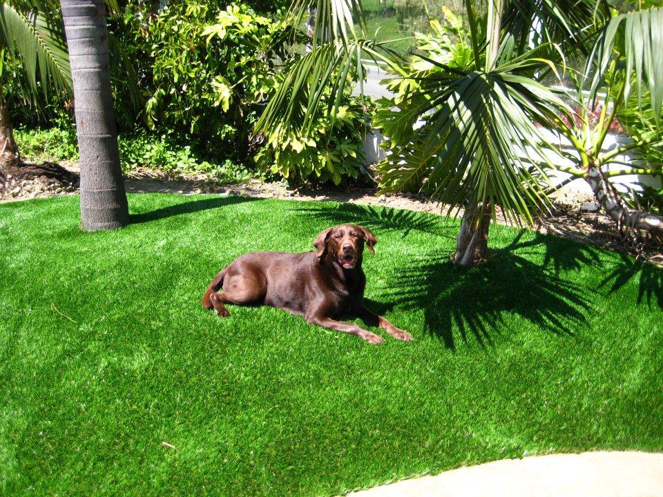 How To Remove Pet Odor / Urine Smell on Artificial Grass?