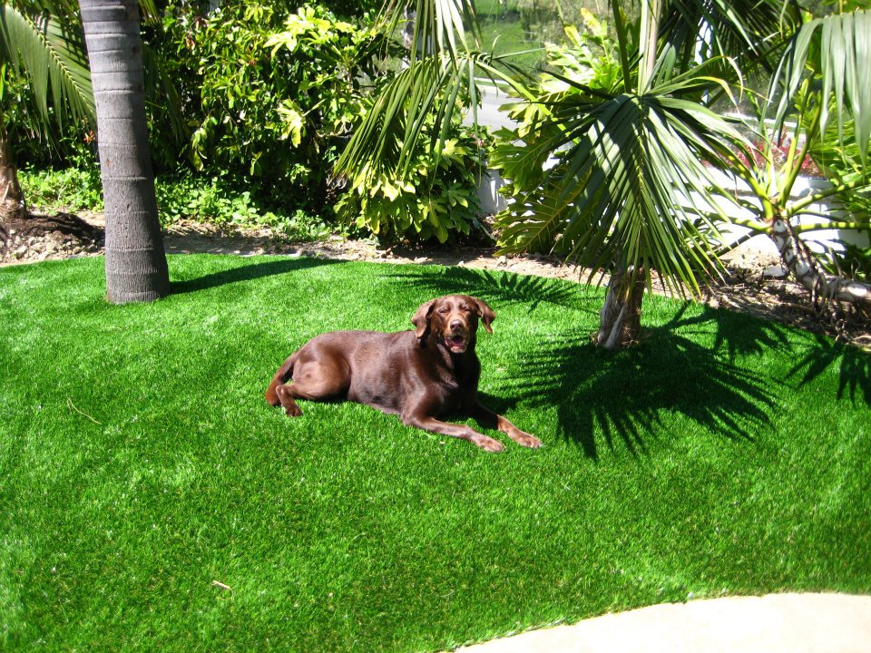 How To Remove Pet Odor / Urine Smell on Artificial Grass?