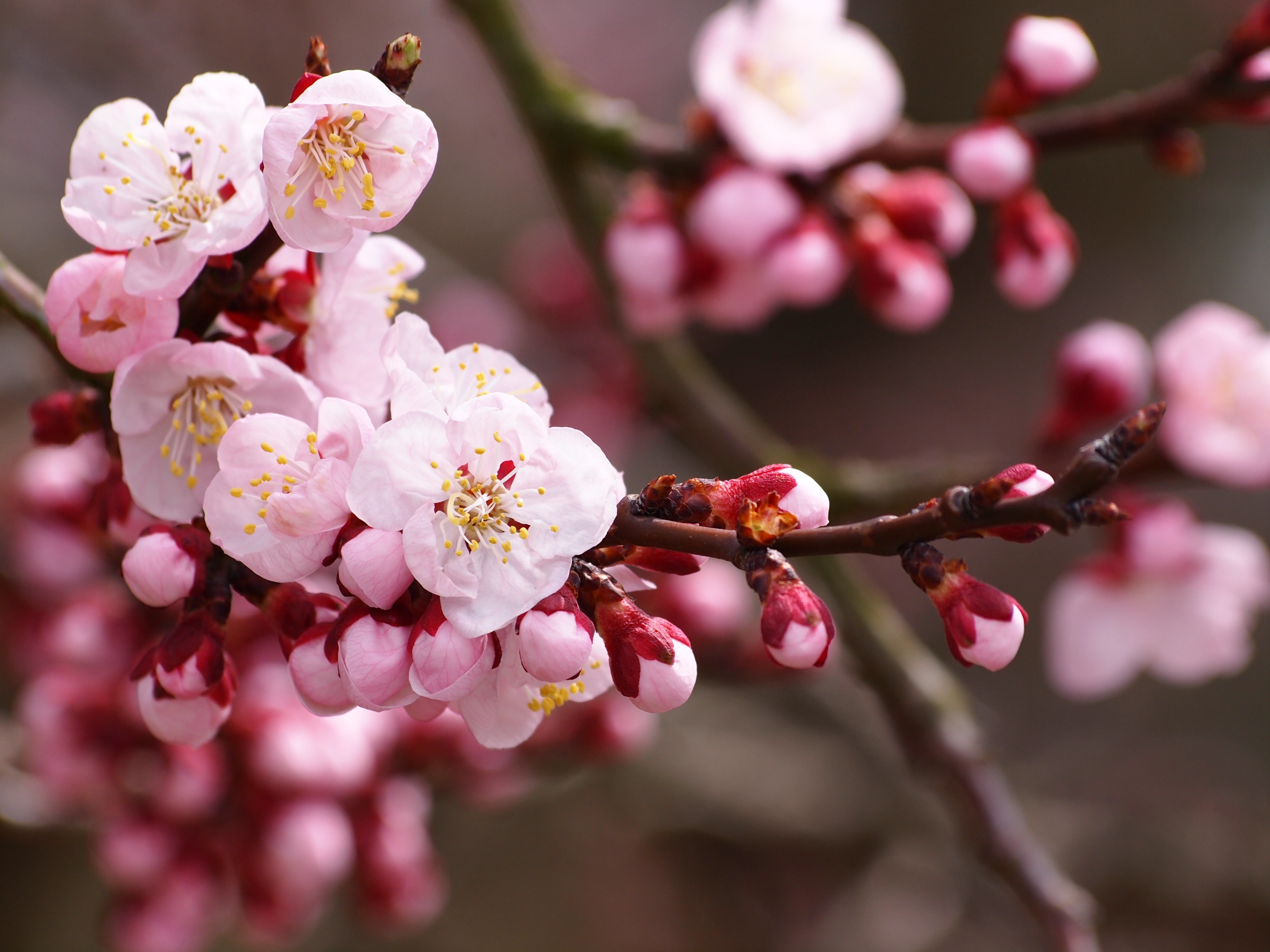 Hobby Store San Diego >> Fruit Trees San Diego Guide: The Best Trees To Plant | INSTALL-IT-DIRECT