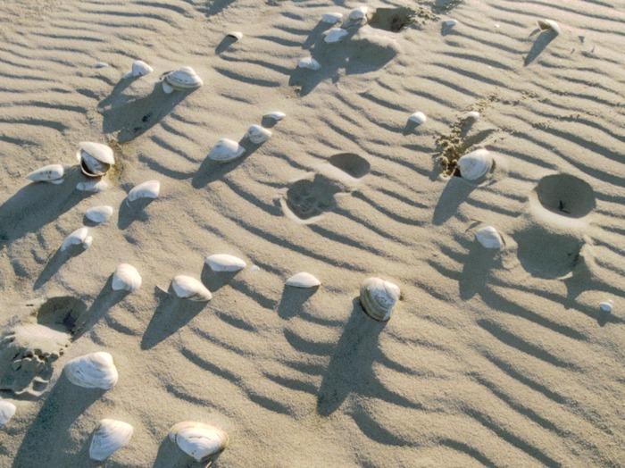 Beach Backyard Ideas backyard ideas Shells On The Beach