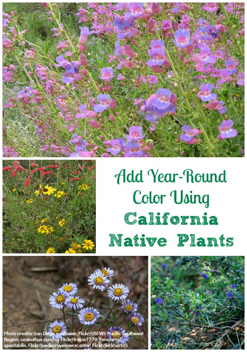 How To Add Year Round Color To My Garden Using California Native Plants?