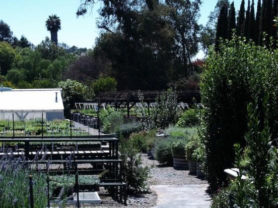 San Diego County Nurseries