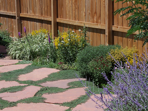 low growing plants guide border plants for walkway install it direct