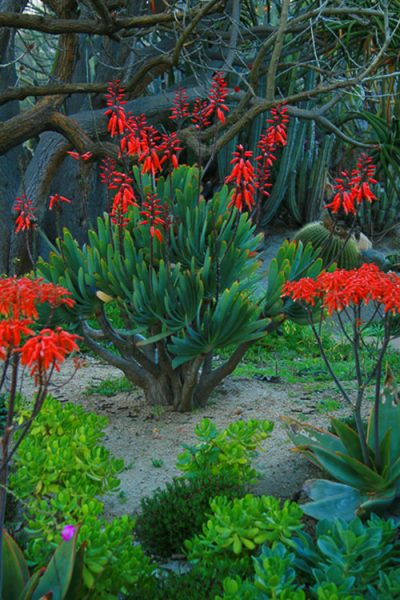 10 Shade Succulents For Your Drought Tolerant Garden