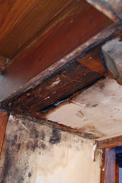 What Happens if Dry Rot is Left Unattended