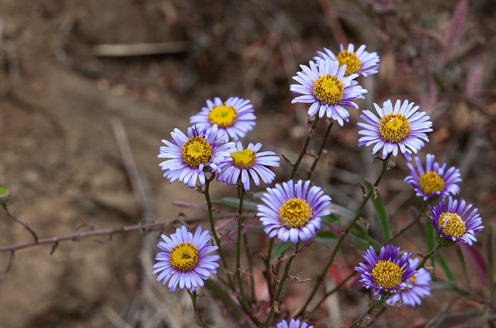 xeriscape california: Use Native Plants