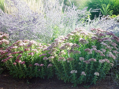 Great Garden Ideas From The Wests Best Gardens together with Xeriscape Landscaping Ideas In Southern California also Yard Makeover Home Stretch additionally Article further Landscapes. on southern california drought tolerant landscape ideas