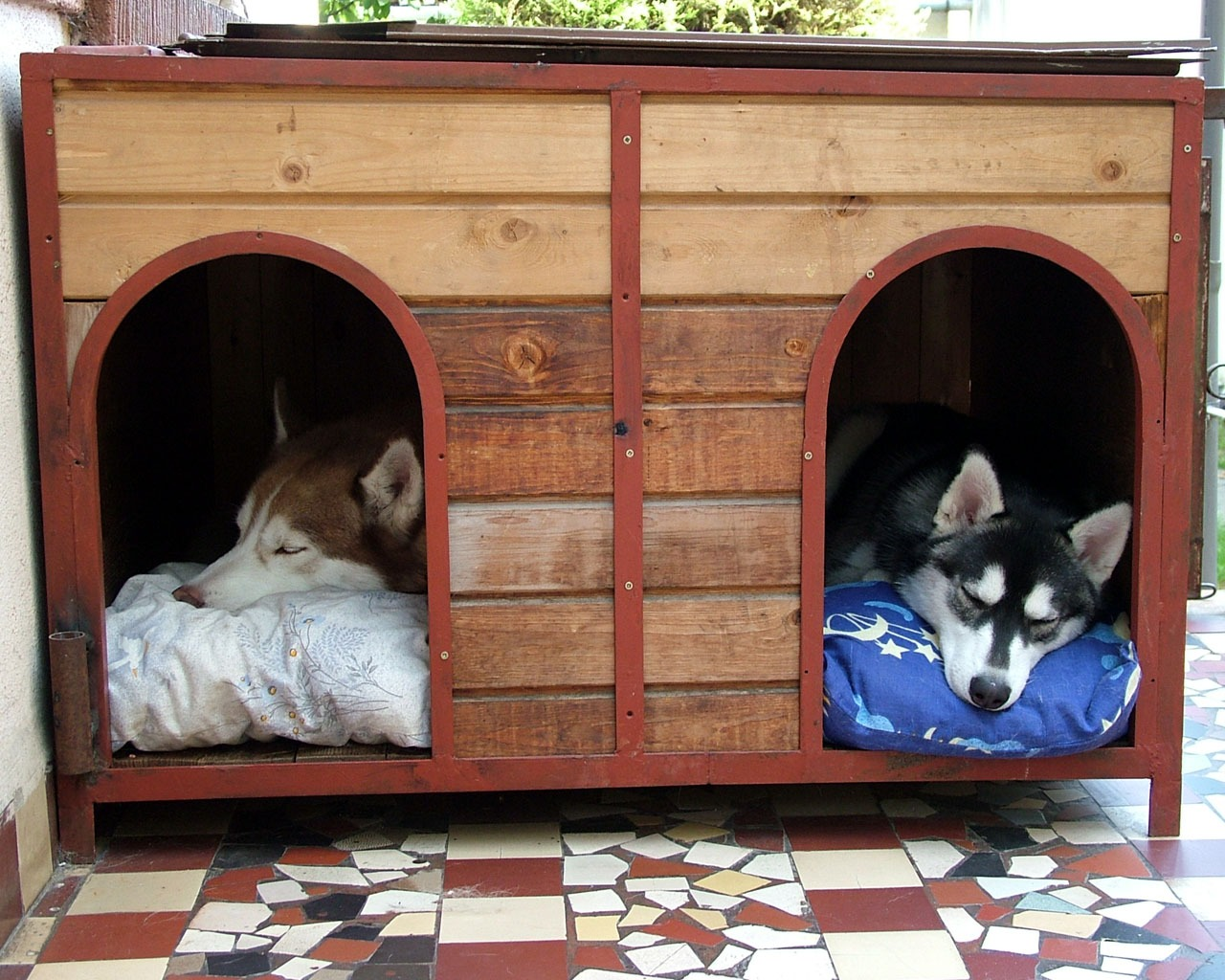 A large doghouse provides shade and a cozy place for two huskies to nap.