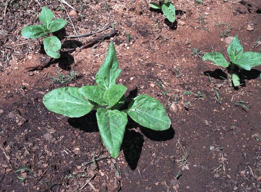 Ground Gardens