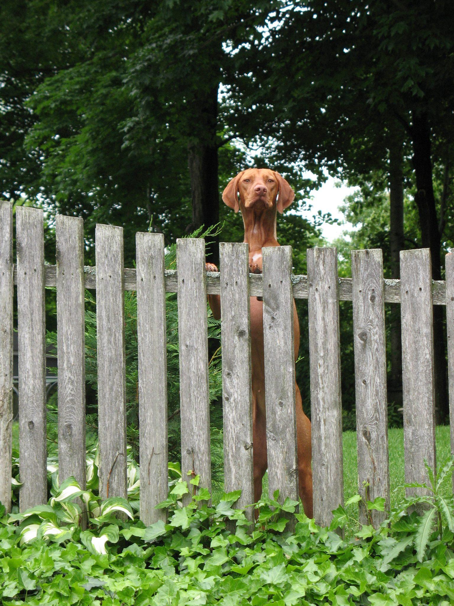 Dog Run Ideas How To Build A Backyard