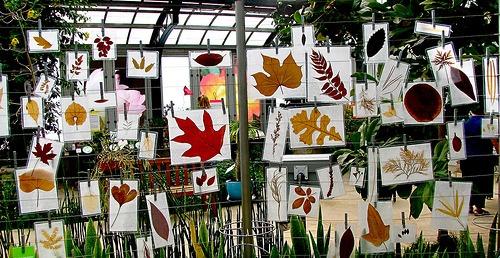 Pressed leaves