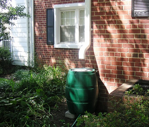 How to Harvest Rainwater Using Rain Barrels