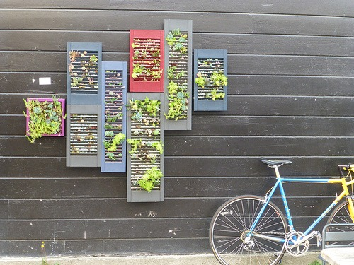vertical garden made from repurposed shutters
