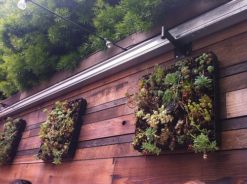 vertical garden nursery tray