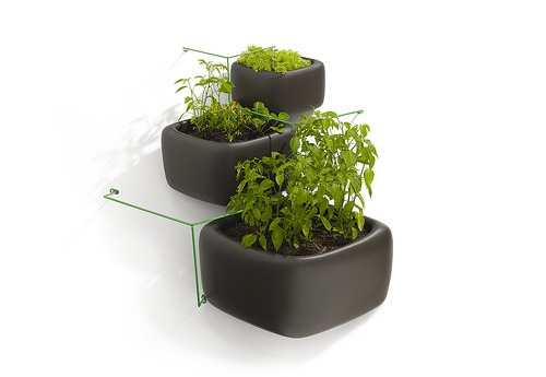 vertical gardening in containers