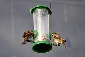 Bird Friendly San Diego Yards