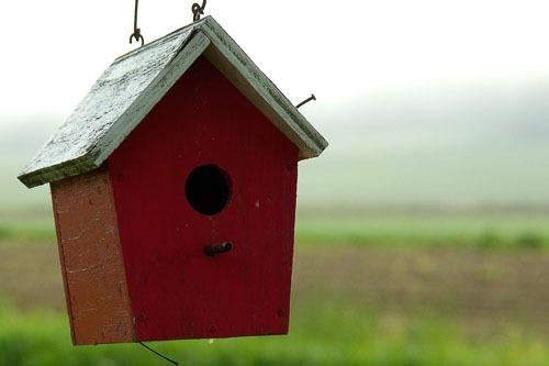Bird Accessories to Consider