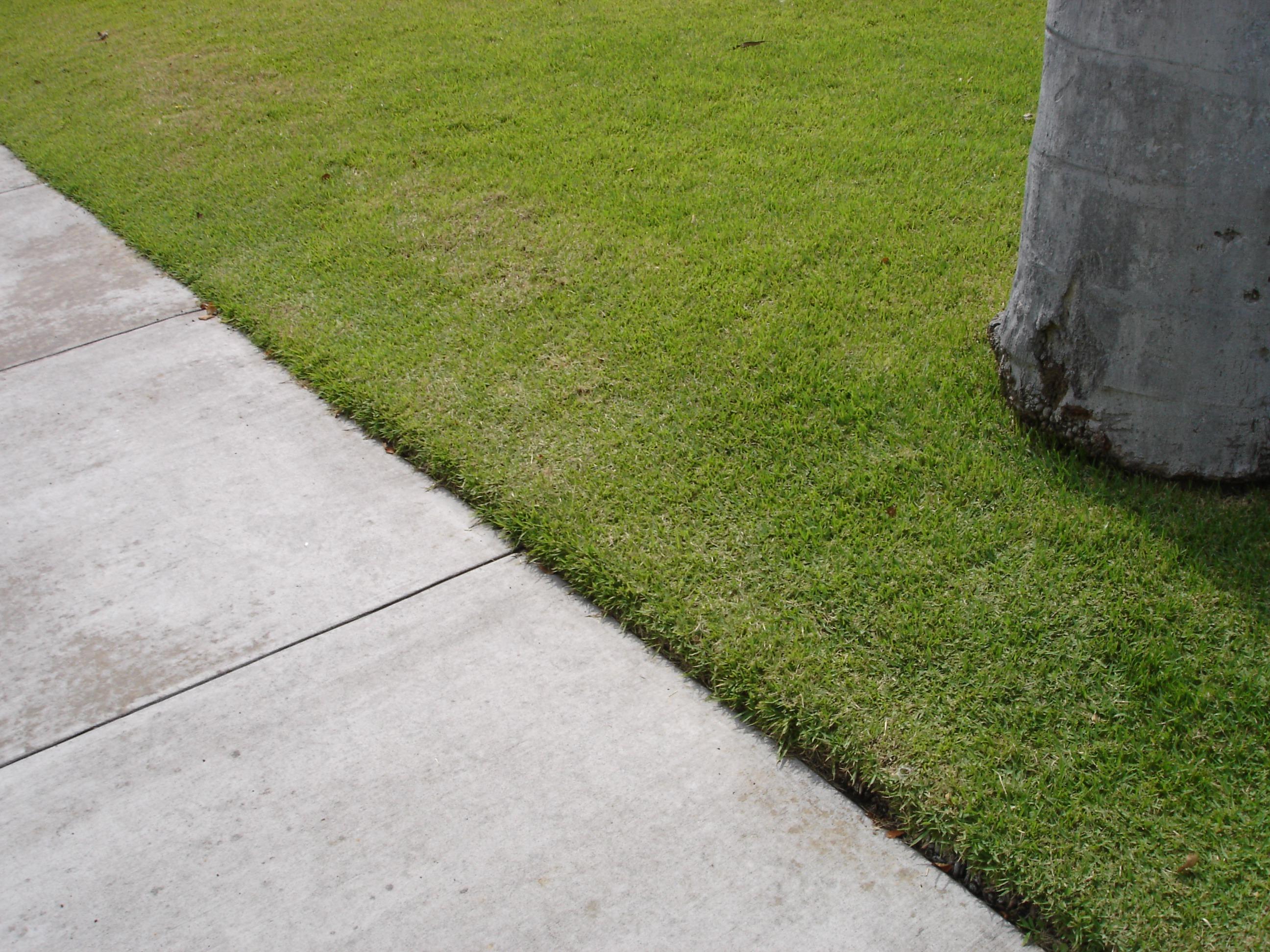Sidewalk Landscaping Curbside Easements Ideas Tips