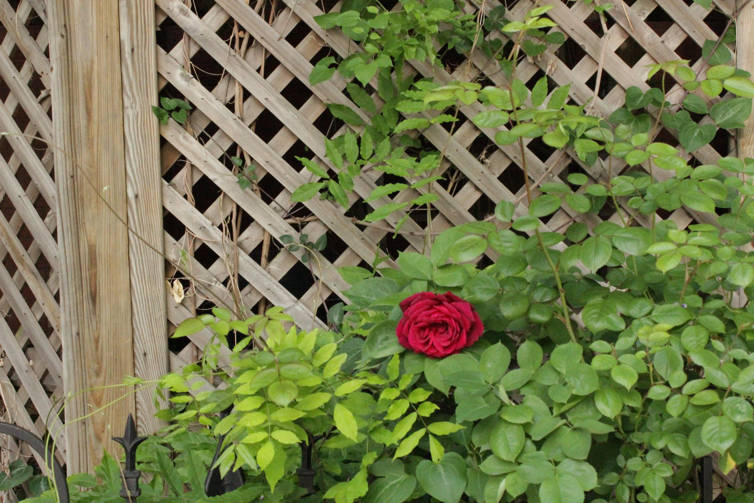 Trellis ideas for privacy - Trellis